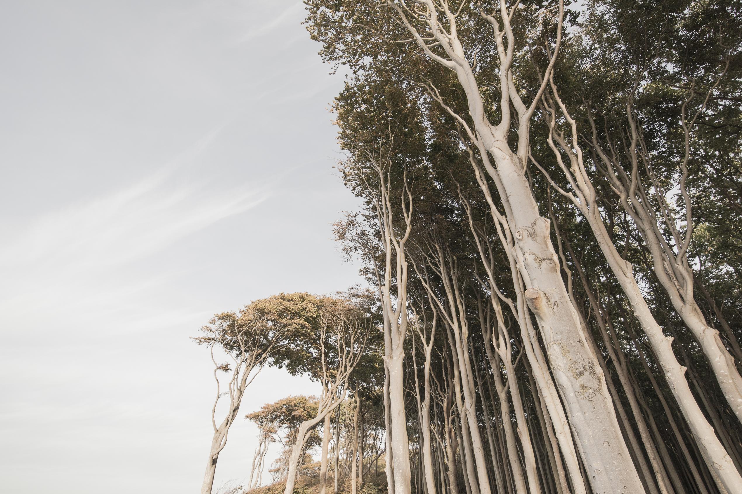 Nienhagen – Gespensterwald